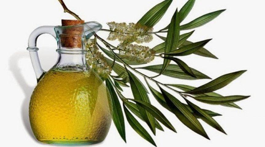 Tinh dầu bạch đàn và những công dụng hữu ích vô cùng