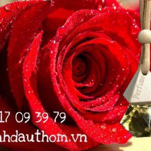 tinh dầu treo xe hoa hồng