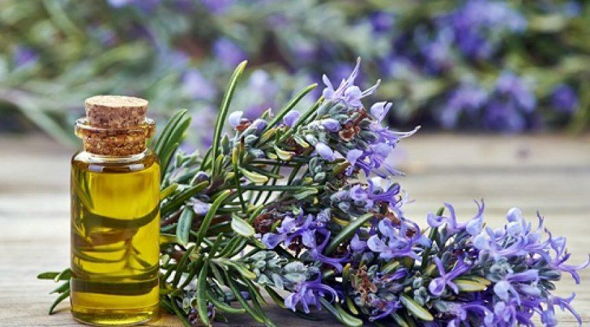 Chọn mùi hương tinh dầu nào cho không gian phòng khách?