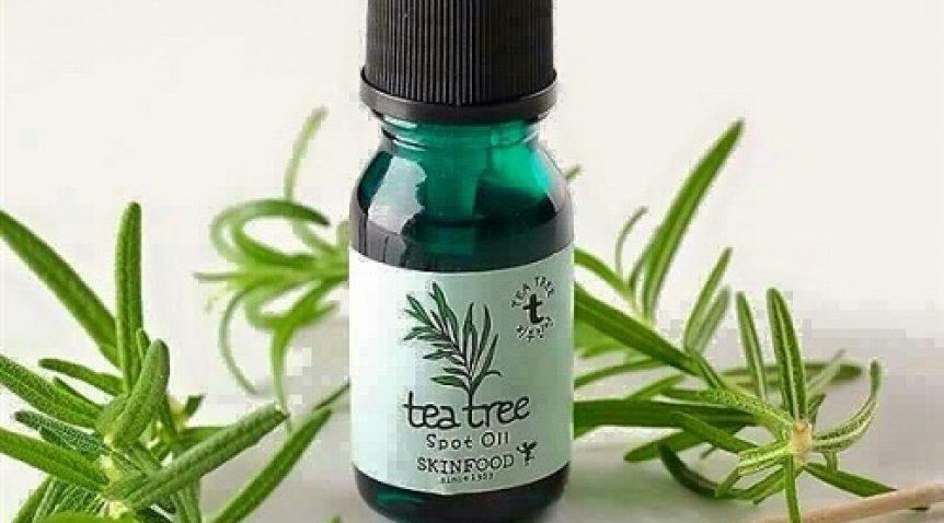 8 Công dụng cực hay của tinh dầu tràm trà