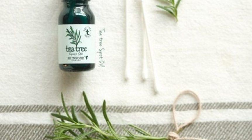Tinh dầu tràm trà – Người bạn đồng hành của phái đẹp