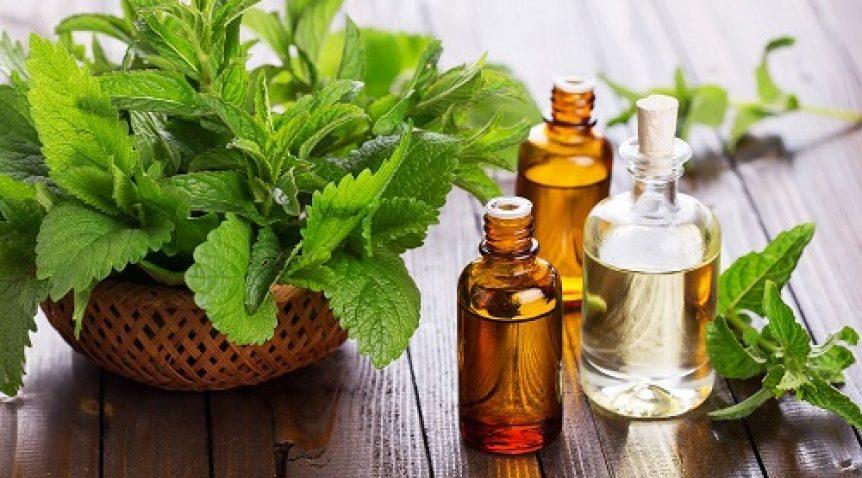 Tổng hợp những loại tinh dầu có tác dụng giải độc cơ thể