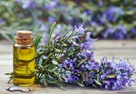 Tự làm tinh dầu hương thảo tại nhà như thế nào?