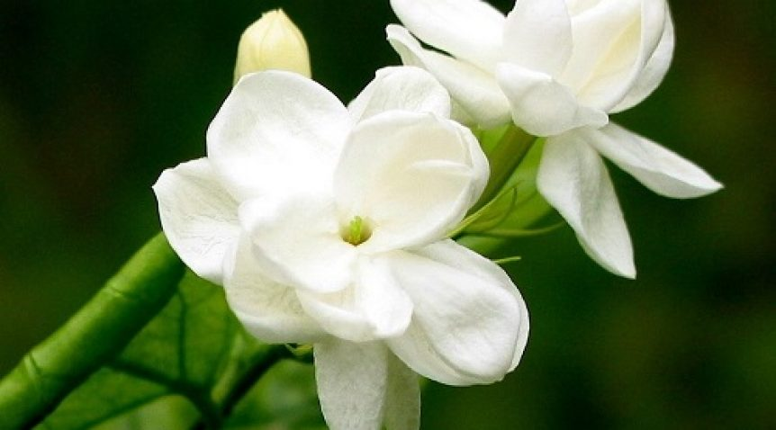6 Loại tinh dầu thiên nhiên làm đẹp làn da hiệu quả