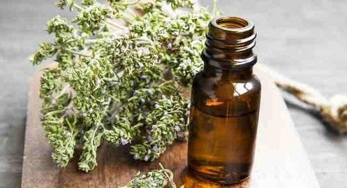 Tác dụng của tinh dầu cỏ xạ hương