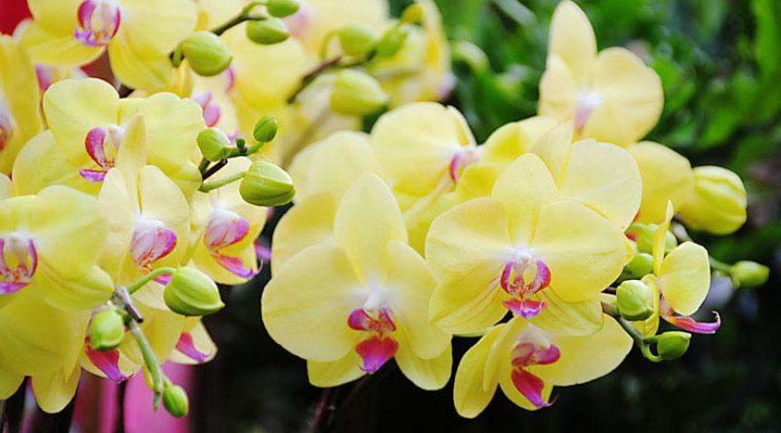 Tìm hiểu tác dụng của tinh dầu hoa lan