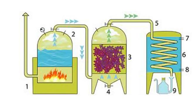 Chưng cất tinh dầu hơi nước